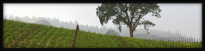 vineyard 29 winery with view